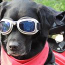 Dog's Sunglasses