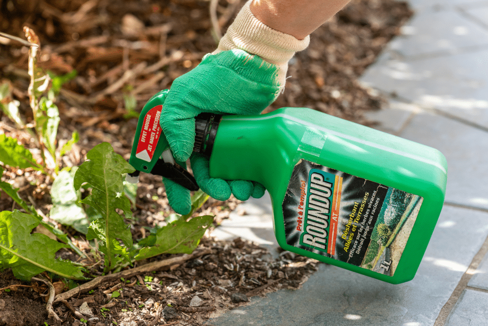 What to Look for When Shopping for Weed Killers