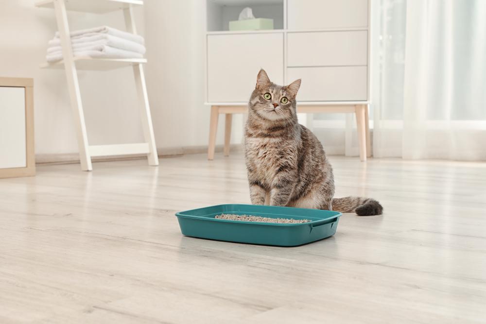 10 Best Cat Litters Reviewed